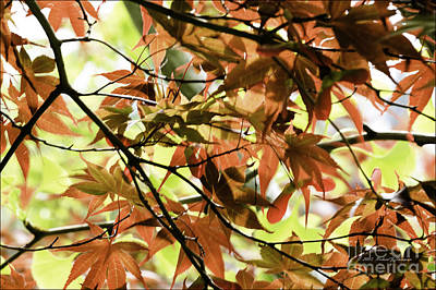 Photograph - Autumn Leaves by Richard J Thompson