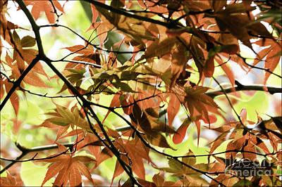 Photograph - Autumn Leaves by Richard J Thompson