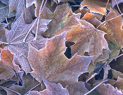 Photograph - Autumn Leaves Stacked And Frosted by Gary Slawsky