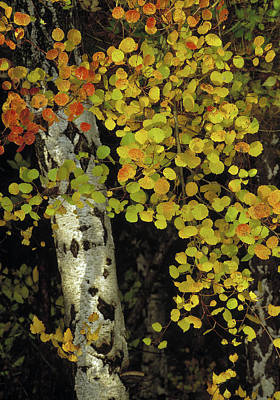 Autumn Leaf Photograph - Autumn Leaves Sweden by Panoramic Images