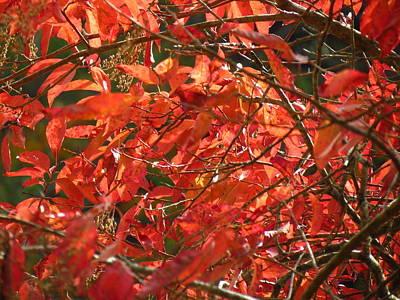 Photograph - Autumn Leaves by Teresa Cox