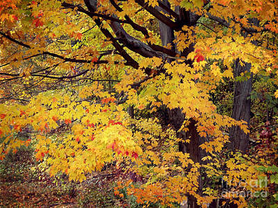Photograph - Autumn Leaves by Tom Brickhouse