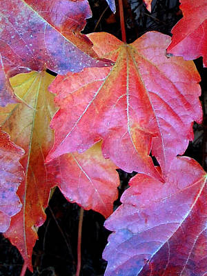 Photograph - Autumn Leaves Up Close by Barbara J Blaisdell