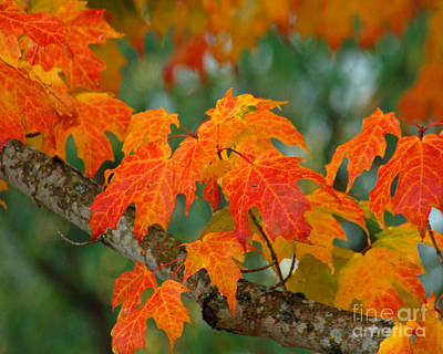 Photograph - Autumn Leaves V by Chuck Flewelling