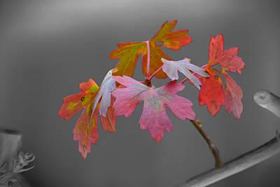 Photograph - Autumn Leaves by Veli Bariskan