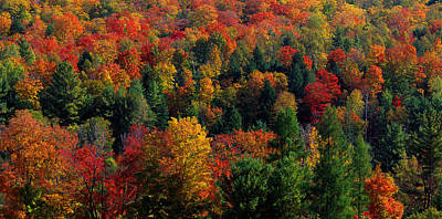Autumn Leaves Vermont Usa Print by Panoramic Images