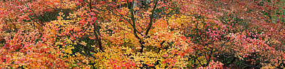 Red Leaves Photograph - Autumn Leaves, Westonbirt Arboretum by Panoramic Images
