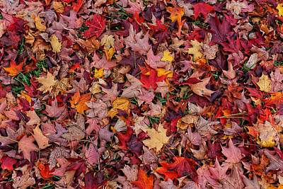 Photograph - Autumn Leaves by William Jobes