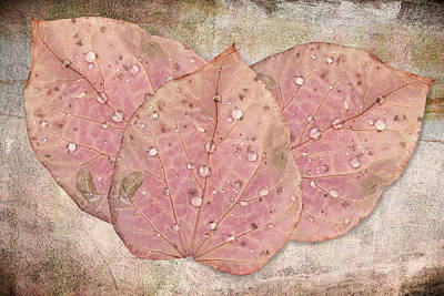 Autumn Leaves With Water Drops  Art Print by Angela A Stanton