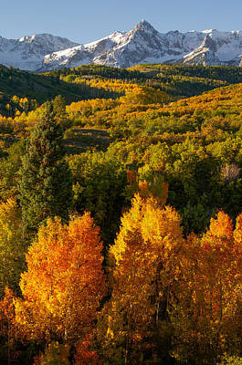 Photograph - Autumn Light by Aaron Spong