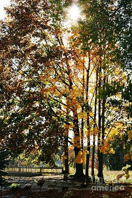 Photograph - Autumn Light by Barbara Bardzik