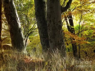 Photograph - Autumn Light by Lutz Baar