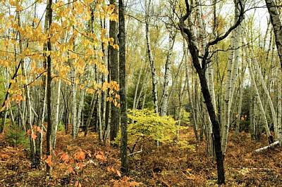 Photograph - Autumn Light - Marion Brooks Natural Area by Joel E Blyler