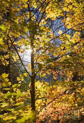 Photograph - Autumn Light by Tamara Becker