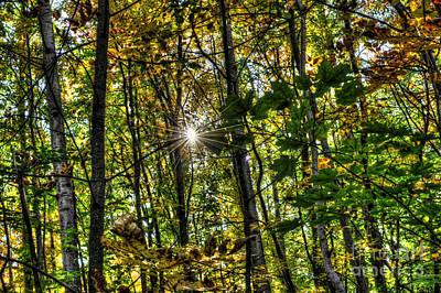 Autumn Lights  Art Print by Rich Fletcher