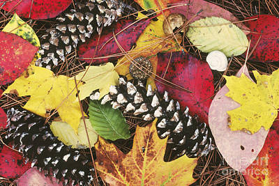 Photograph - Autumn Litter by David Davis