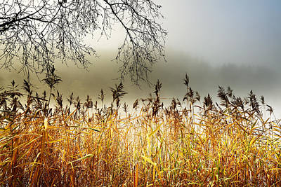 Photograph - Autumn Loch Ard  by Grant Glendinning