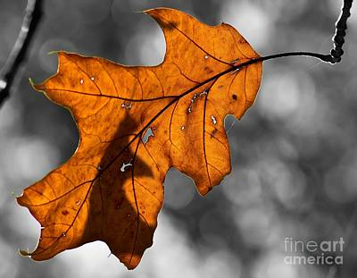 Photograph - Autumn Loneliness by Julie Clements