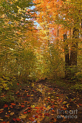 Photograph - Autumn Magic by Joshua McCullough