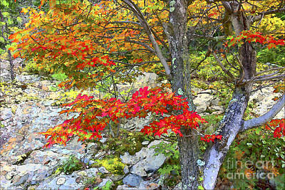Watercolor With Pen Photograph - Autumn Maple - 03184-85 - 'd' by Byron Spencer