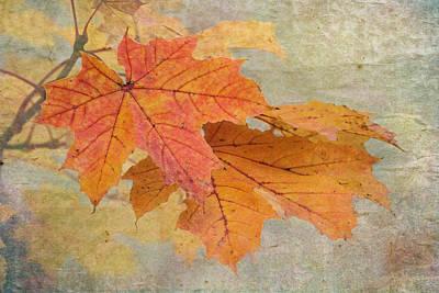 Autumn Foliage Photograph - Autumn Maple by Angie Vogel