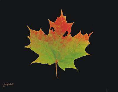Photograph - Autumn Maple Leaf 1 by Joe Duket