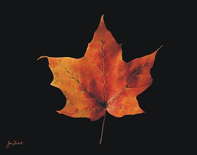 Photograph - Autumn Maple Leaf 2 by Joe Duket