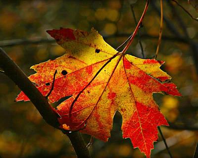 Autumn Maple Leaf Art Print by Richard Engelbrecht