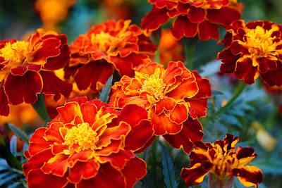 Photograph - Autumn Marigold by Milena Ilieva