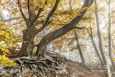 Kim Fearheiley Photography - Autumn by Markus Gann