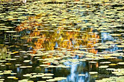 Priska Wettstein Pink Hues - Autumn Marsh by Cheryl Baxter