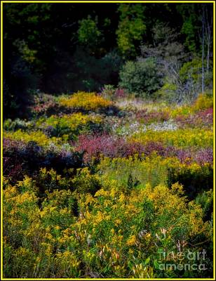 A Summer Evening Photograph - Autumn - Meadow Wildflowers by Henry Kowalski