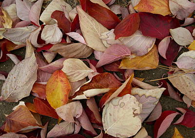 Photograph - Autumn Medley by Michele Myers