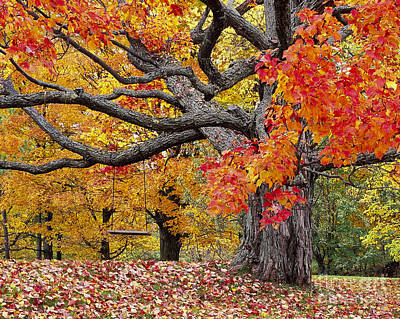 Autumn Memories Art Print by Alan L Graham