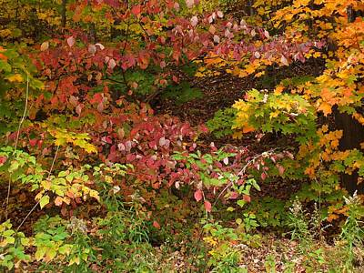 Photograph - Autumn Mix by Gene Cyr