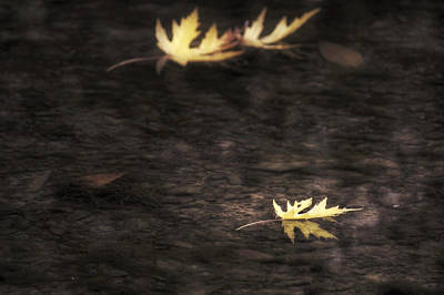Photograph - Autumn Mood - Fall - Leaves by Jason Politte