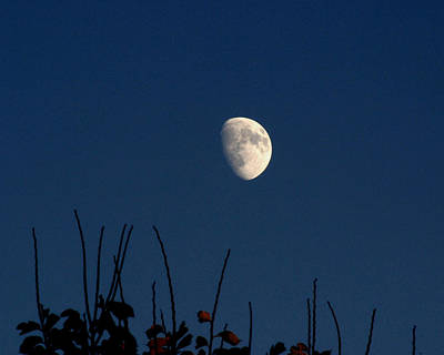 Photograph - Autumn Moon by Gene Walls