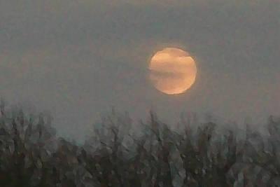 Autumn Moon Gold Original by Wide Awake Arts