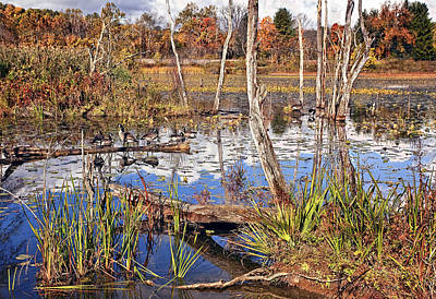 Fern Photograph - Autumn Morning At The Marsh by Marcia Colelli