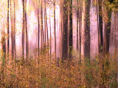 Photograph - Autumn Morning by Grace Dillon