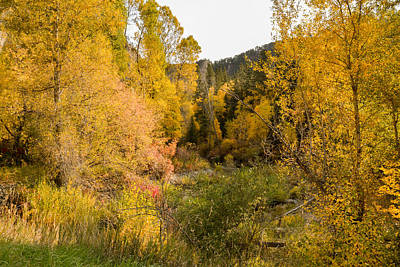 Photograph - Autumn Morning In Spearfish Canyon by Dakota Light Photography By Dakota