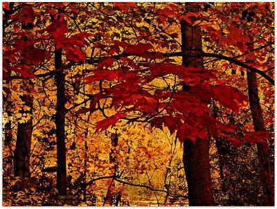 Autumn Mosiac  Art Print by Dianne  Lacourciere