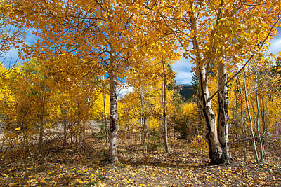 Photograph - Autumn Mountain Aspen by Cascade Colors