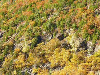Photograph - Autumn Mountain Side by Gene Cyr