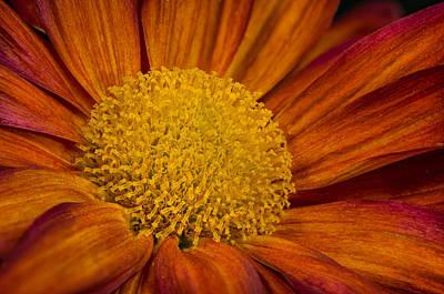 Photograph - Autumn Mum by Randy Walton
