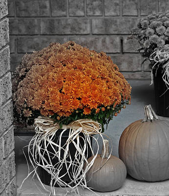 Photograph - Autumn Mums by Kathy J Snow