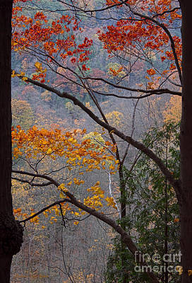 Photograph - Autumn Naturally Framed by Barbara McMahon
