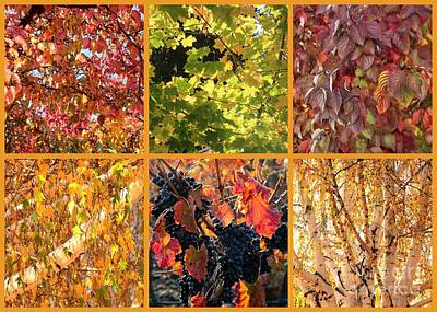 Grape Leaves Photograph - Autumn Nature Collage by Carol Groenen