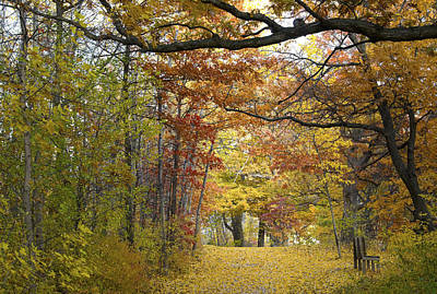 Autumn Nature Trail Art Print