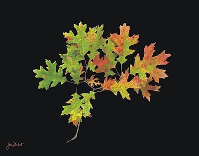 Photograph - Autumn Oak Leaves by Joe Duket
